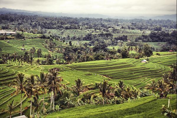 Bali_2015_DSC_4848_Small
